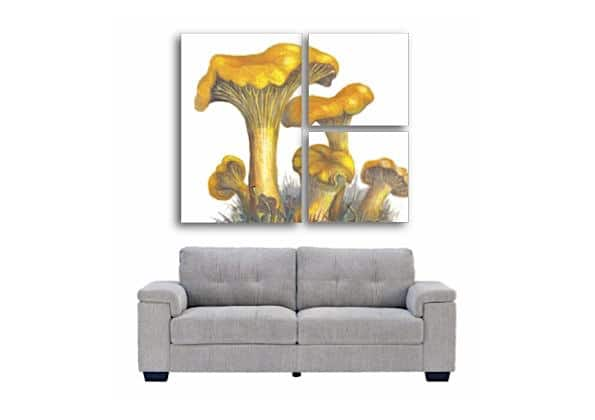 chanterelles and sofa 1 1000px4