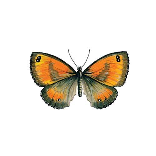 Gatekeeper Butterfly Illustration for product design