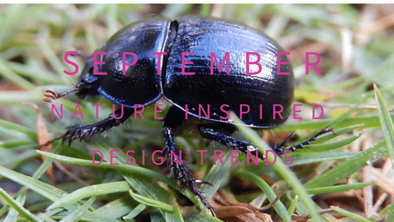 Great British beetles with their irridescent colours